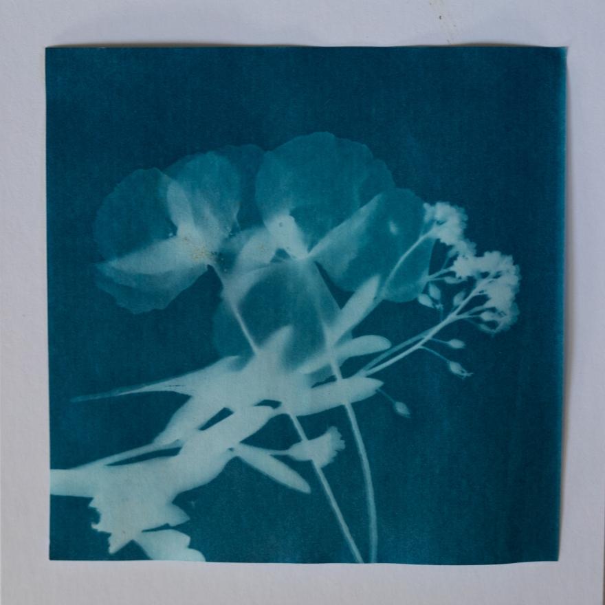 Wildflowers-7233