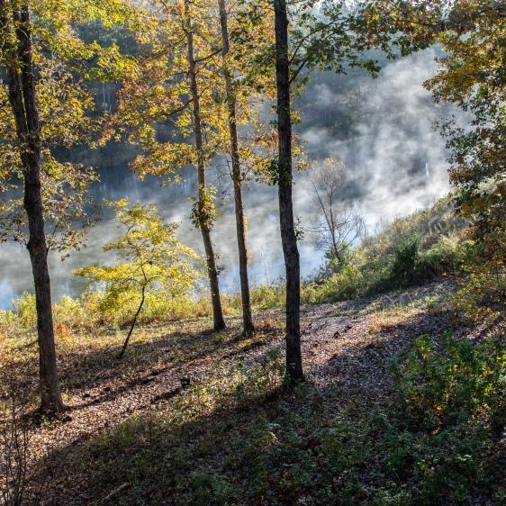 Rising Mist Nov 2018